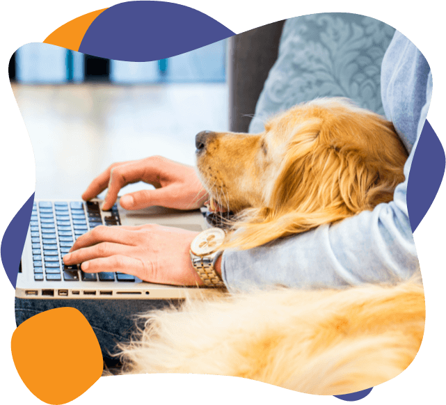 a golden retriever lies on its owner as they work on their laptop