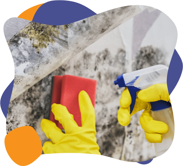 an enviropure home cleaning specialist removes mold from a wall